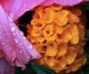 Rain Flowers 08thmbthmb