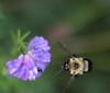 Bee in Lovethmbthmb