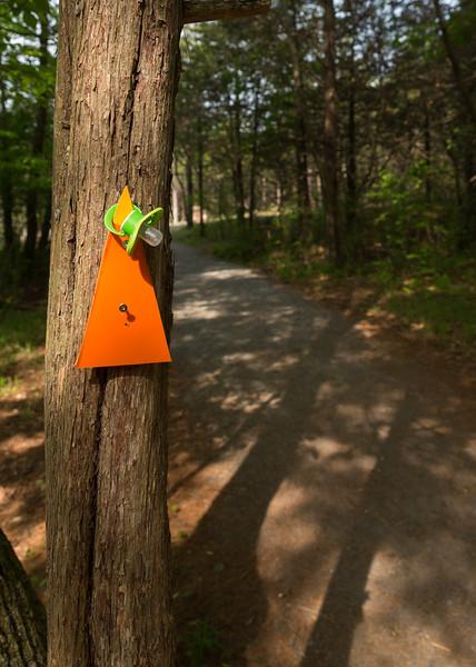 Beginner's Trail