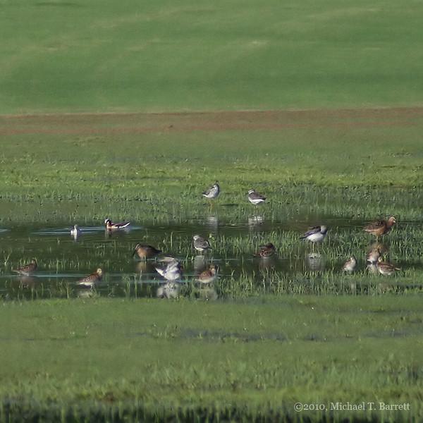Assorted Shorebirds #1