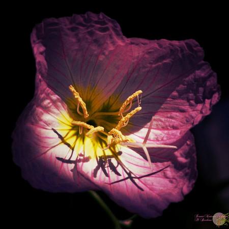 Flower in Shadow