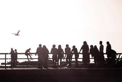 Venice Beach Skate Club