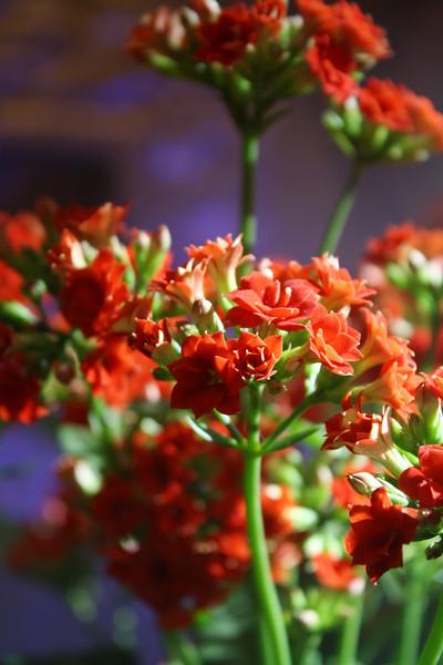 CNY 2012 Flowers