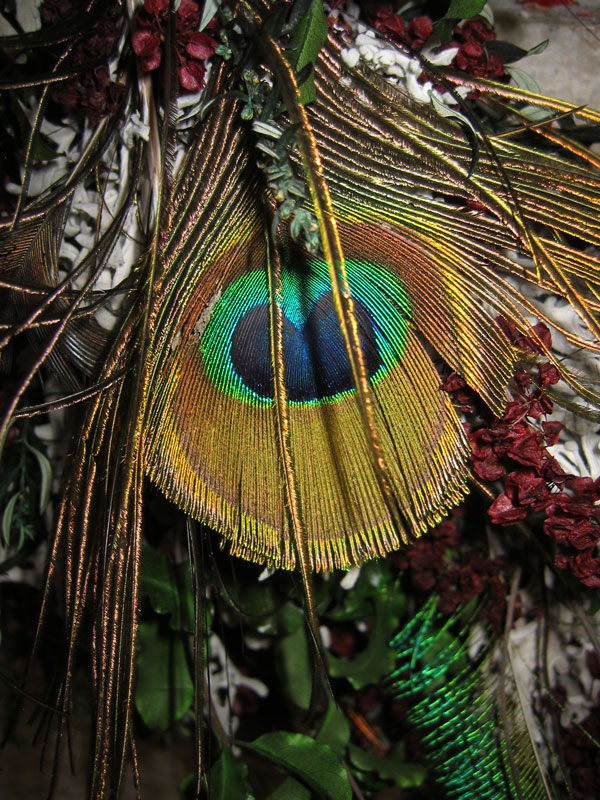 Peacock feathers in a wreath at Powell Gardens.