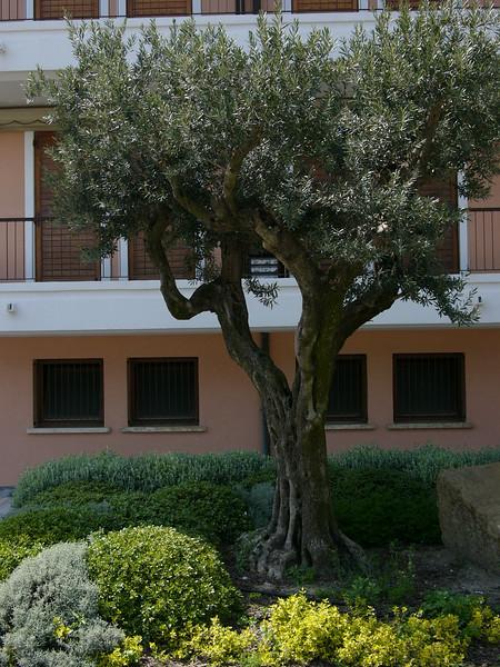 Oster-Kurz-Urlaub (2 Tage) nach Grado ins Hotel Savoy alle 4 zusammen! Meerspaziergang, Bummeln, Sonne! Olivenbaum
