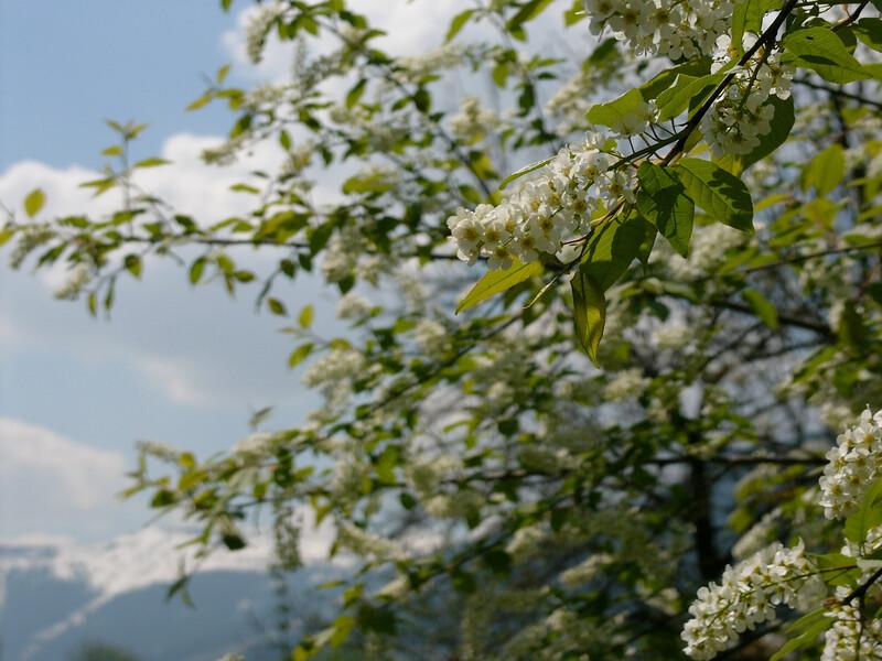 Unser Garten Saalfelden im Frühling Mai 2006