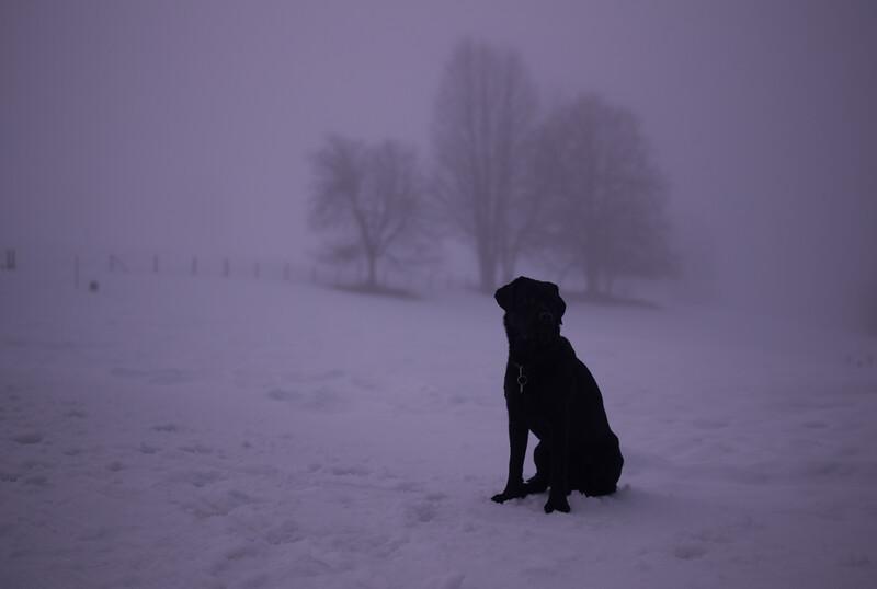 Wanderung mit Andy & Joe im tiefen Nebel - Schnee! Bäume, Stilleben