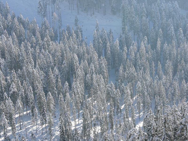 Wanderung alle zusammen Steinalm im tiefen Schnee