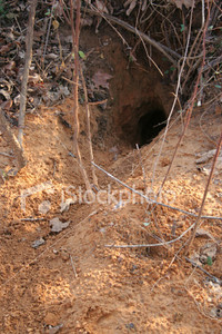 """<a href=""""http://www.istockphoto.com/file_closeup/object/4618022.php?id=4618022&refnum=jwilkinson"""" target=""""istock"""">Animal Den</a><br>The entrance to an animal's den, found in the woods. A path through the dirt from the hold leads out from it. <br><br>This could be used for many animals, such as badger, gopher, fox, etc, but this is actually a groundhog's hole.<br>"""