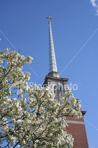 "<a href=""http://www.istockphoto.com/file_closeup/object/3433271.php?id=3433271&refnum=jwilkinson"" target=""istock"">Church steeple framed by Dogwood</a><br>A traditional-style church steeple topped by a cross rises into a brilliant blue sky, framed in the corner by a flowering dogwood tree.<br><br>Useful for spring and Easter themes.<br><br>Focus is on the steeple & cross.  Includes copy space.<br>Please use respectfully.<br><br><br><br>See also:<br><a href=http://www.istockphoto.com/file_closeup.php?id=3352073><img border=0 src='http://www.istockphoto.com/file_thumbview_approve.php?size=1&id=3352073'></a> <a href=http://www.istockphoto.com/file_closeup.php?id=3352133><img border=0 src='http://www.istockphoto.com/file_thumbview_approve.php?size=1&id=3352133'></a>   <a href=http://www.istockphoto.com/file_closeup.php?id=3351959><img border=0 src='http://www.istockphoto.com/file_thumbview_approve.php?size=1&id=3351959'></a> <a href=http://www.istockphoto.com/file_closeup.php?id=3352023><img border=0 src='http://www.istockphoto.com/file_thumbview_approve.php?size=1&id=3352023'></a><br>"