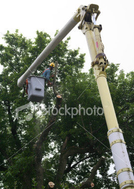 """<a href=""""http://www.istockphoto.com/file_closeup/object/2340771.php?id=2340771&refnum=jwilkinson"""" target=""""istock"""">Tree trimmer working in cherry picker</a><br>a tree trimmer/removal person high up in a pine tree, cutting in a tree with a chain saw as he works from a cherry picker truck<br><br>See also: <br><a href=http://www.istockphoto.com/file_closeup.php?id=2340708><img border=0 src='http://www.istockphoto.com/file_thumbview_approve.php?size=1&id=2340708'></a> <a href=http://www.istockphoto.com/file_closeup.php?id=2387019><img border=0 src='http://www.istockphoto.com/file_thumbview_approve.php?size=1&id=2387019'></a> <a href=http://www.istockphoto.com/file_closeup.php?id=2387093><img border=0 src='http://www.istockphoto.com/file_thumbview_approve.php?size=1&id=2387093'></a> <br><a href=http://www.istockphoto.com/file_closeup.php?id=2629393><img border=0 src='http://www.istockphoto.com/file_thumbview_approve.php?size=1&id=2629393'></a>  <a href=http://www.istockphoto.com/file_closeup.php?id=2648318><img border=0 src='http://www.istockphoto.com/file_thumbview_approve.php?size=1&id=2648318'></a> <br>"""