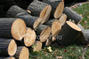 "<a href=""http://www.istockphoto.com/file_closeup/object/2648318.php?id=2648318&refnum=jwilkinson"" target=""istock"">Log Pile</a><br>stack of wood logs cut into short lengths for firewood as a tree is being removed.<br><br>See also my photos of tree removal workmen and square-cut logs.<br><br><a href=http://www.istockphoto.com/file_closeup.php?id=2340771><img border=0 src='http://www.istockphoto.com/file_thumbview_approve.php?size=1&id=2340771'></a> <a href=http://www.istockphoto.com/file_closeup.php?id=2387019><img border=0 src='http://www.istockphoto.com/file_thumbview_approve.php?size=1&id=2387019'></a> <a href=http://www.istockphoto.com/file_closeup.php?id=2340708><img border=0 src='http://www.istockphoto.com/file_thumbview_approve.php?size=1&id=2340708'></a>  <a href=http://www.istockphoto.com/file_closeup.php?id=2387093><img border=0 src='http://www.istockphoto.com/file_thumbview_approve.php?size=1&id=2387093'></a><br><a href=http://www.istockphoto.com/file_closeup.php?id=2629393><img border=0 src='http://www.istockphoto.com/file_thumbview_approve.php?size=1&id=2629393'></a>  <br>"