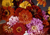 "<a href=""http://www.istockphoto.com/file_closeup/object/54500.php?id=54500&refnum=jwilkinson"" target=""istock"">flower, dalias</a><br>a basket of beautiful red, orange, purple and yellow flowers, (believe they are dalias or zinias).   Please drop me a note if/where you use this photo."