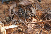<a href=http://www.istockphoto.com/file_closeup/object/4617916.php?id=4617916&refnum=jwilkinson target=istock>animal droppings</a><br>deer or groundhog droppings, traces left in a suburban yard<br><br>good for concepts like<br>urban encroachment onto wildlife habitat, deer and other animals in<br>urban &amp; suburban environments, etc<br><br>(yes, a bit gross, sorry)<br><br>See also:<br><a href=http://www.istockphoto.com/file_closeup.php?refnum=jwilkinson&id=4618022><img border=0 src=http://www.istockphoto.com/file_thumbview_approve.php?refnum=jwilkinson&size=1&amp;id=4618022></a>  <a href=http://www.istockphoto.com/file_closeup.php?refnum=jwilkinson&id=4617780><img border=0 src=http://www.istockphoto.com/file_thumbview_approve.php?refnum=jwilkinson&size=1&amp;id=4617780></a> <br>