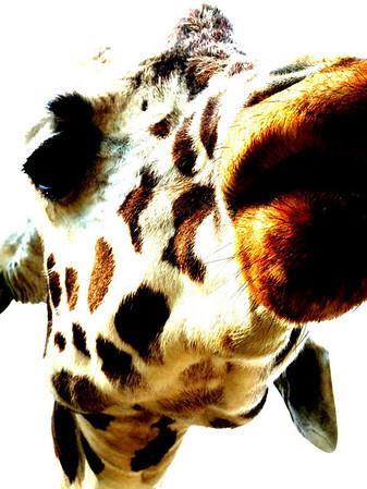 Stock Photography- Animals