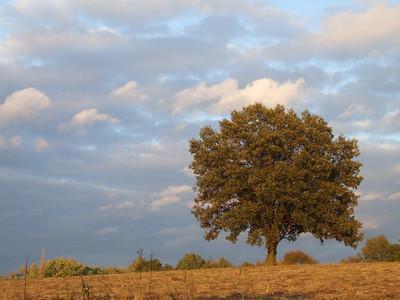 Stock Photography- Landscape