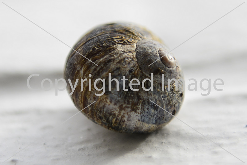 Snail on White Wall