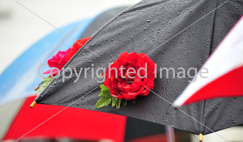 Umbrella Rose