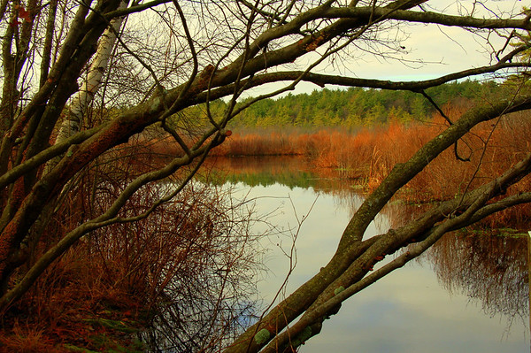 Stony Brook Wildlife Sanctuary, Norfolk, MA