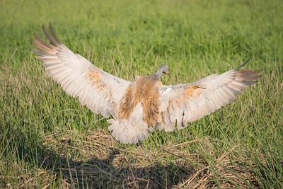 Landing Crane