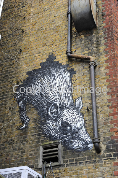 Rat on a drainpipe by Roa