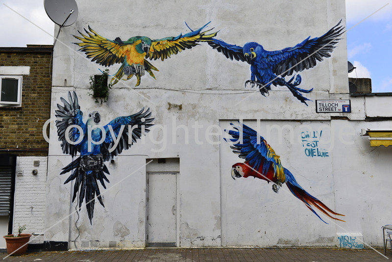 Birds on a Wall
