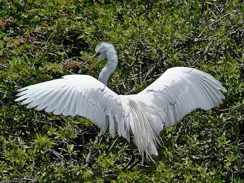 Awendaw Egret Stretch