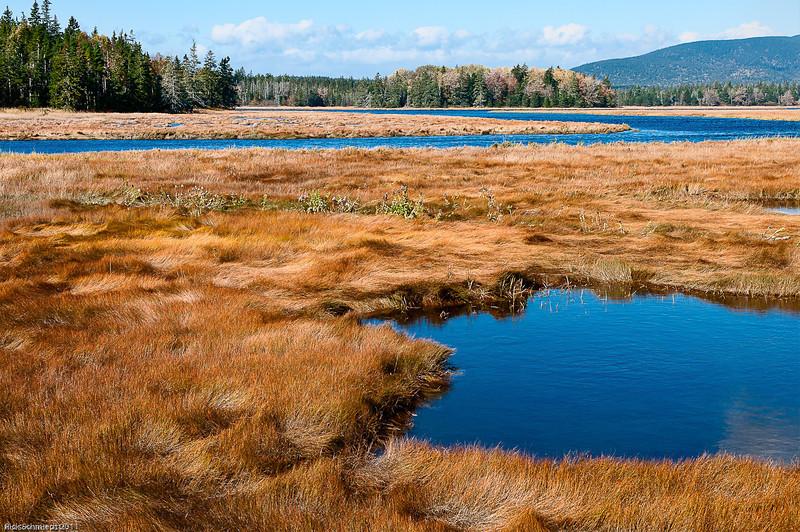 Marsh Bogs near Southwest Harbor, Maine