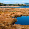 Marsh Bogs near Southwest Harbor, Maine