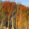 Fall Color Reflections on Lake Secession II