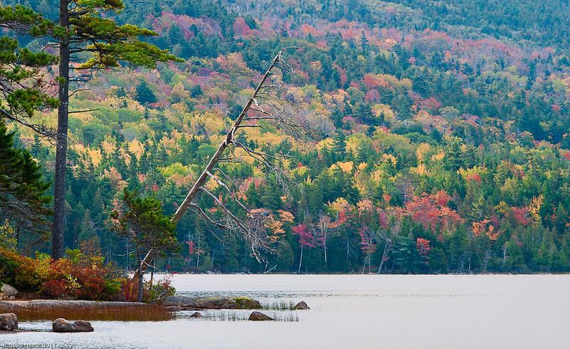 Eagle Lake Trees with Fall Colors