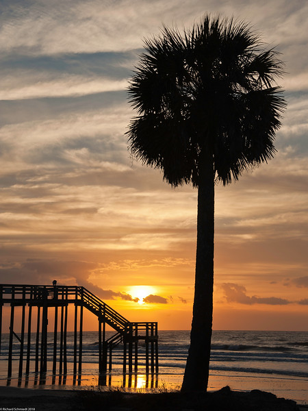 Folly Beach Palm at Sunrise