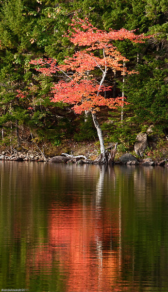 Fall Reflection on Eagle Lake, Maine