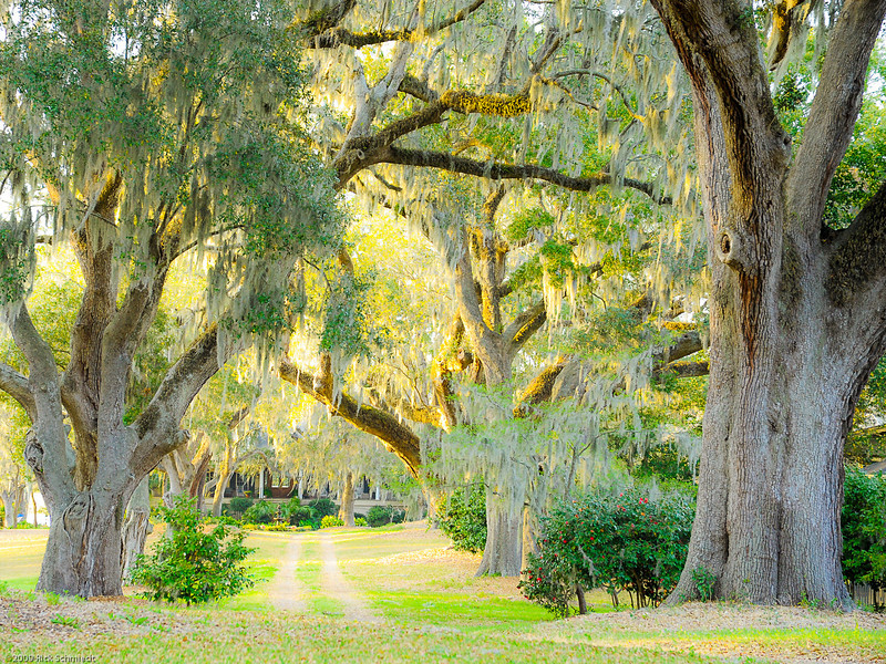 Hobcaw Point Plantation