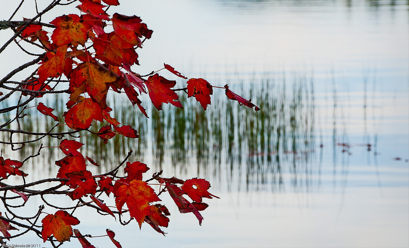 Red Leaves against Eagle Lake, Maine