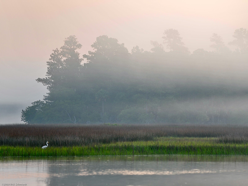 Great Egret in Morning Mist