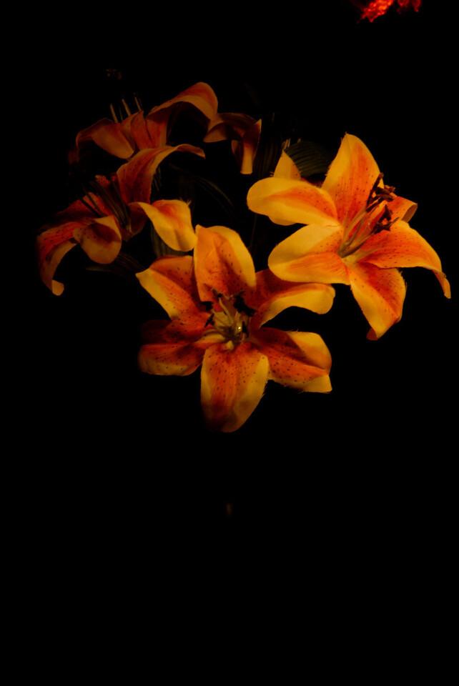 Flowers ©John Dillon
