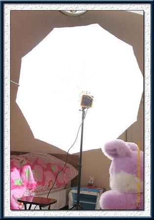 Alienbees AB800 in umbrella