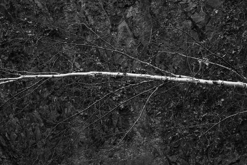 Leaning tree along the cliffs of Tischer Creek. Duluth, MN. #monotone #blackandwhite #pentaxk1 #duluthmn #northshore