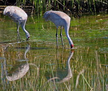 Three Sisters Wetland