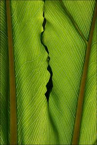 Leaf, #3813