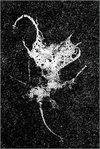 Invading Biophage (Mantis)#1557-7D