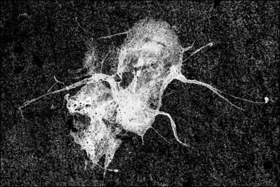 Skull Tentacles#1400-7D