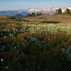 Ridgeline meadow