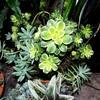 Garden 19