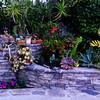 Garden 23