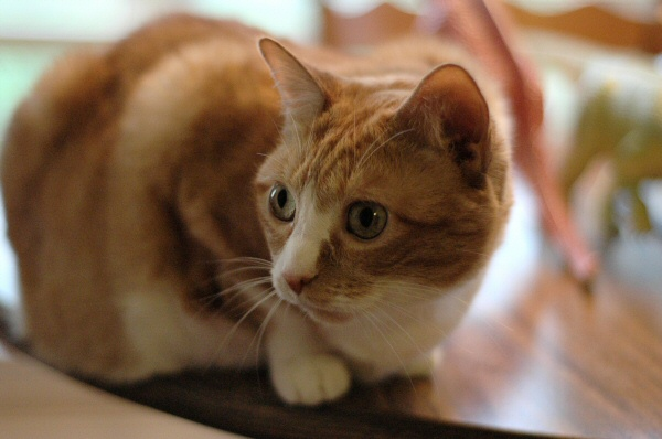 And my baby, Shelby.  Another one trying out the 50mm f/1.8.
