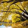 Autumn along the Big Sioux River