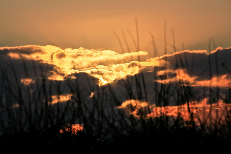Sunrise through twigs