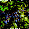 Berries Polaroid transfer